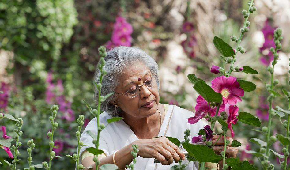 An elderly woman in a lush garden uses pruning shears to trim bright pink flower plants.