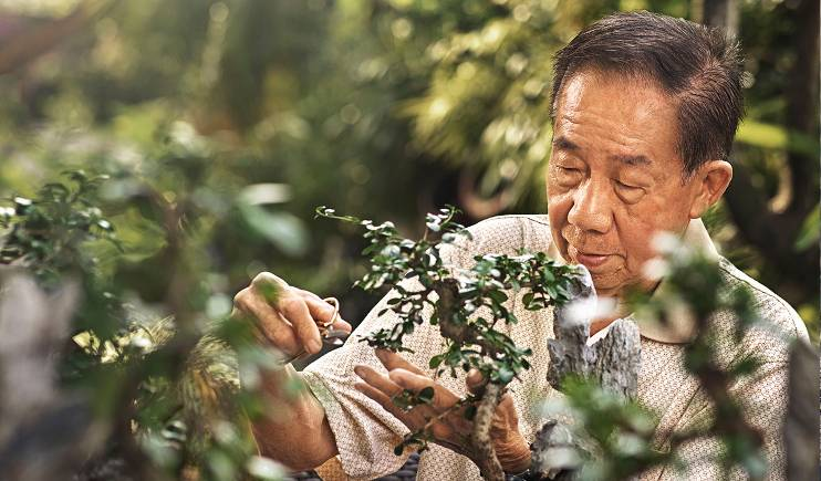 An elderly man prunes a bonsai tree.