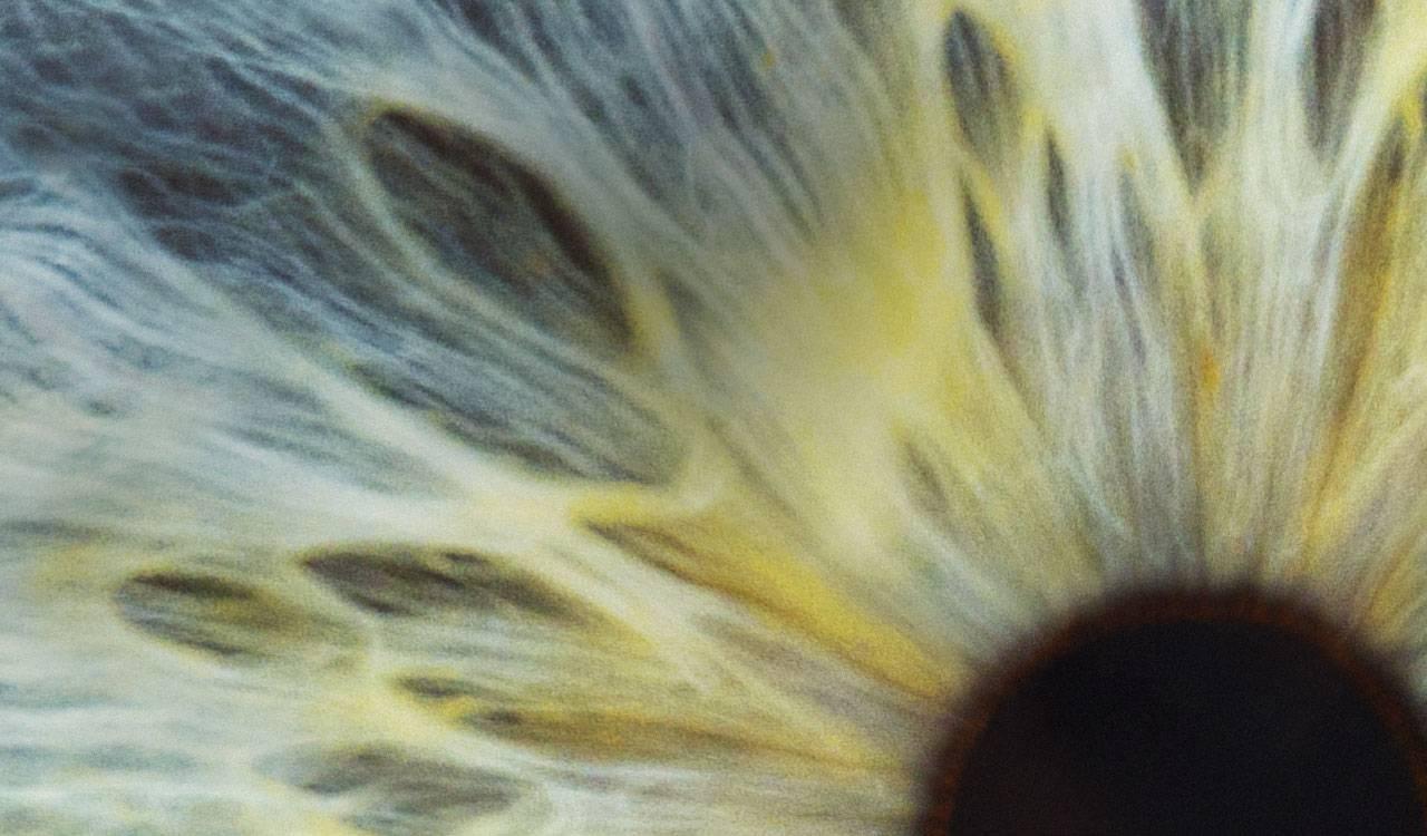 雅培视力保健