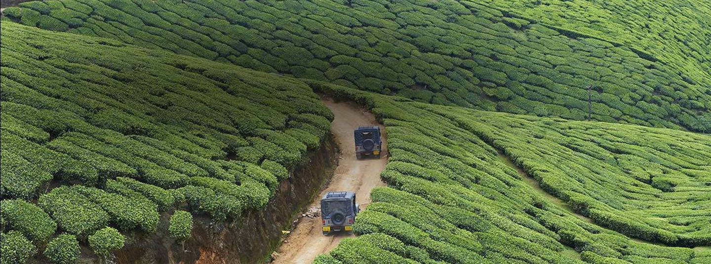 Aerial view of two jeeps driving on a dirt road across a tea plantation.