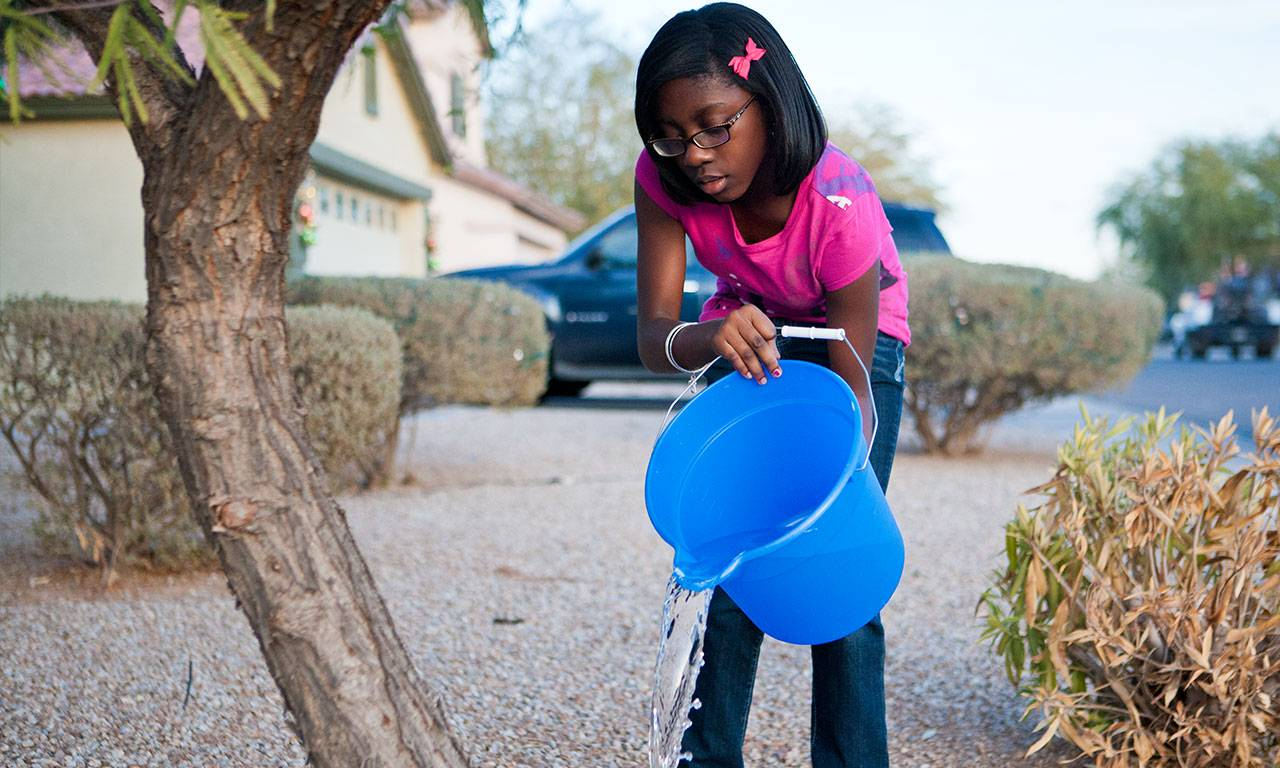 A little girl pours a bucket of water onto a tree's soil.