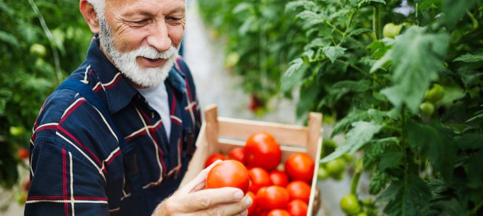 A Renewed Focus in Today's 'New Normal' on Addressing Malnutrition in Older Adults