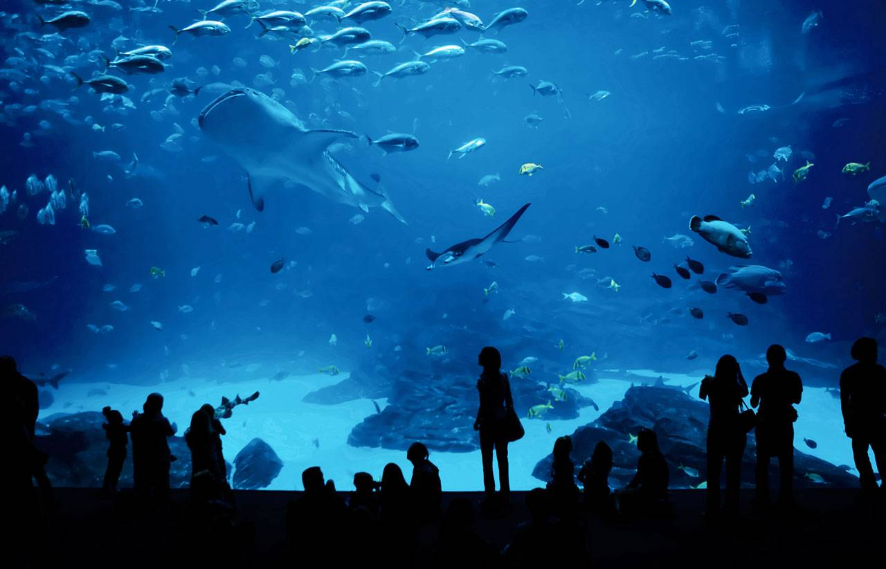 Visitors to an aquarium look through a glass wall into a large blue water tank full of fish and sharks.