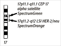 JP-AMD-FISH-PathVysion-Ideogram-02